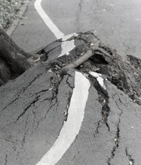 Blog image - Everything You Need To Know About Subsidence In Sixty Seconds